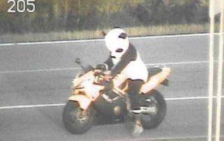 conducir vestido de oso panda
